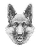 niemiecka shepherd portret Obrazy Stock