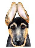 niemiecka shepherd portret beak dekoracyjnego latającego ilustracyjnego wizerunek swój papierowa kawałka dymówki akwarela ilustracji
