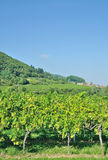 Niemiecka wino trasa, Palatinate, Niemcy Zdjęcie Stock