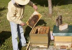Niemiecki beekeeping obraz stock