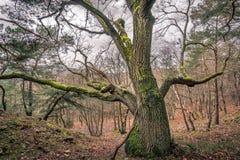 Niemiecki las Obrazy Royalty Free