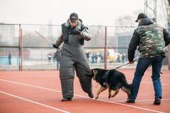 Niemiecki pasterskiego psa szkolenie w Gomel regionalności Obrazy Royalty Free