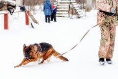 Niemieckie pasterskiego psa sztuki z swój właścicielem Obrazy Royalty Free