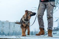 Niemieckiej bacy szczeniak z właścicielem fotografia stock