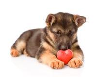 Niemieckiej bacy szczeniaka pies z czerwonym sercem Na biel Obrazy Royalty Free