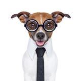 Niemy biznesu pies obrazy royalty free