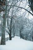Śnieżna ścieżka w zimie Fotografia Royalty Free