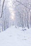 Śnieżna ścieżka w zimie Obrazy Royalty Free