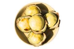 Nieng de Luk, fruit de haricot de djenkol d'isolement sur le fond blanc Images stock