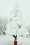 Śnieżny potwór na drzewie Fotografia Royalty Free