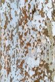Nieociosana drewniana tekstura w Węgry obrazy royalty free