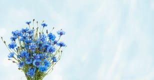 Nieociosanego Szerokiego kąta błękitny tło z bukieta Błękitny Chabrowym Fotografia Royalty Free