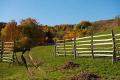 Nieociosani jesienni kolory Zdjęcie Royalty Free