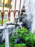Nieociosany czopek, Faucet na ogródzie/ Zdjęcie Royalty Free