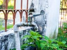 Nieociosany czopek, Faucet na ogródzie/ Fotografia Royalty Free