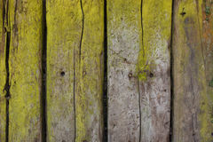 Nieociosany drewniany tło z zielenią szlamową Zdjęcia Royalty Free