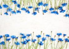 Nieociosany tło z dwa granic wzorem Błękitny Chabrowy Fotografia Stock