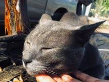 Niepłochliwy kot obraz stock