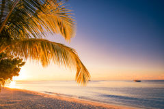 Nieporuszona tropikalna plaża, Maldives plaża Obrazy Royalty Free