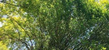 Nieporuszony las, naturalny las, naturalny piękno obraz stock