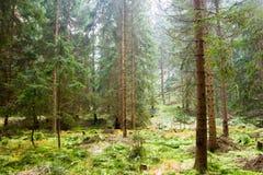 Nieporuszony lasu krajobraz Obrazy Royalty Free