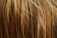 Nieporządny Zwierzęcy włosy zdjęcia stock