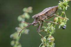 Nieprawdopodobny insekt zdjęcia royalty free