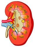 Nier stock illustratie