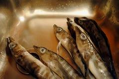 nierdzewny rybi lodowy zlew zdjęcie royalty free