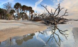 Botaniki zatoki plaży prezerwy Morski Lasowy SC zdjęcie royalty free