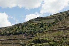 Nieruchomość wśród winniców Douro rzeki dolina Zdjęcia Royalty Free