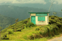 nieruchomości herbata Zdjęcia Stock