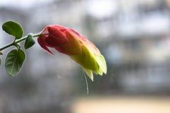 Niesamowicie piękny kwiat z zamazanym tłem obraz stock