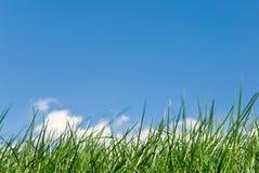 niesamowita trawy Zdjęcie Royalty Free