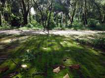 Niesamowity światło słoneczne Przez drzew przy Lumbini, miejsce narodzin Buddha fotografia royalty free