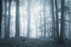 Niesamowity las z mgłą i światłem zdjęcia royalty free