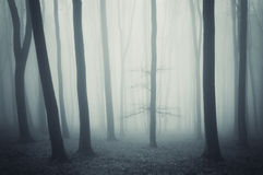 Niesamowity las z mgłą i drzewem w opóźnionej jesieni Zdjęcia Royalty Free
