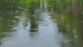 Nieselnde Regen-Wasser-Tropfen, die einer Natur-Teich-Oberfläche von einem niedrigen Winkel fallen stock footage