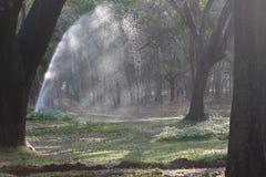 Nieselndes Wasser, das am Park am Abend besprüht Stockbild