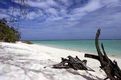 Nieskazitelna biała piaskowata plaża z dryftowym drewnem Zdjęcia Royalty Free