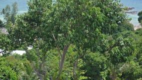 Nieskończoność pływacki basen z dennym widokiem na tropikalnym wyspy Koh Phangan swobodny ruch 3840x2160 zbiory