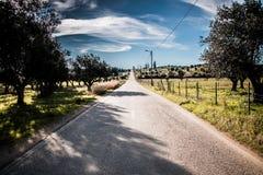 nieskończona road Fotografia Royalty Free