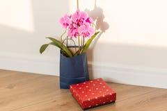 Niespodzianka kwiaty i prezent Różowy orchidei i prezenta pudełko indoors na podłoga, tło lekka słoneczna ściana, kopii przestrze Zdjęcie Royalty Free