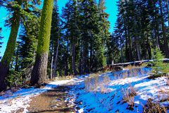 Niespodziewany Lekki śnieg podczas gdy na natury podwyżce Zdjęcia Royalty Free