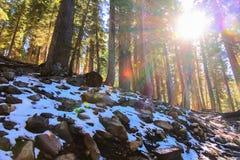 Niespodziewany Lekki śnieg w Jeziornym Tahoe Kalifornia podczas gdy na Scenicznym Fotografia Royalty Free
