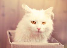 Niespokojny spojrzenie kot Zdjęcia Stock