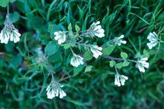 Niestaranni kwiaty Zdjęcie Royalty Free