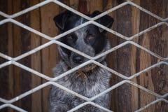 Nieszczęśliwy smutny pies w klatce Obraz Royalty Free