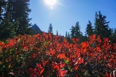 Niet de enige koele vlek in MT Rainier National Park stock afbeeldingen