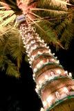 Niet een Kerstboom Stock Foto